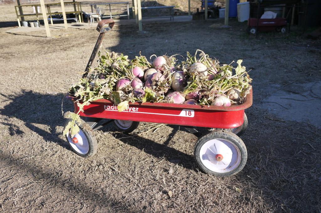 turnip wagon ho!