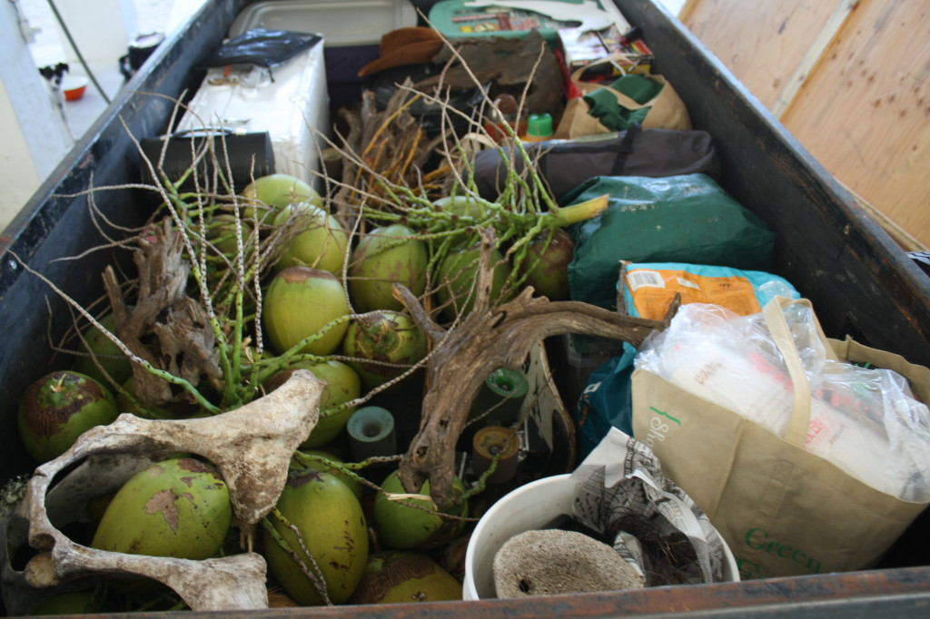 trailer packed with coconuts and ready to head north