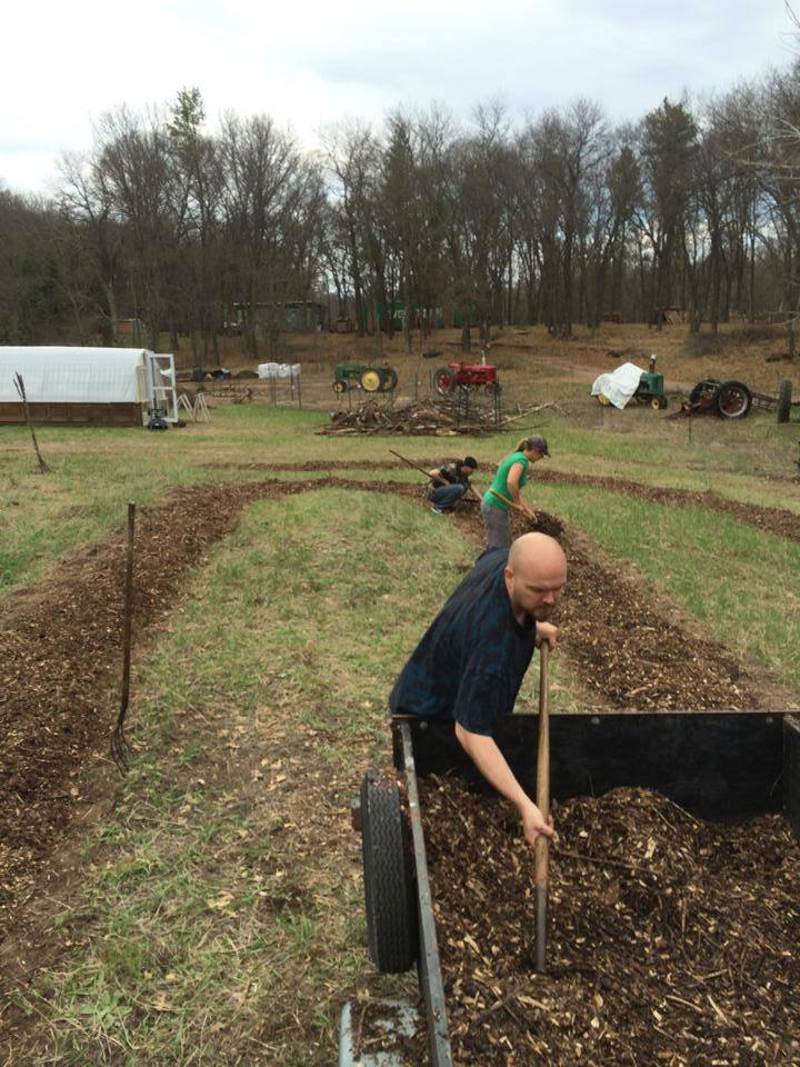 mulching the new raspberry beds