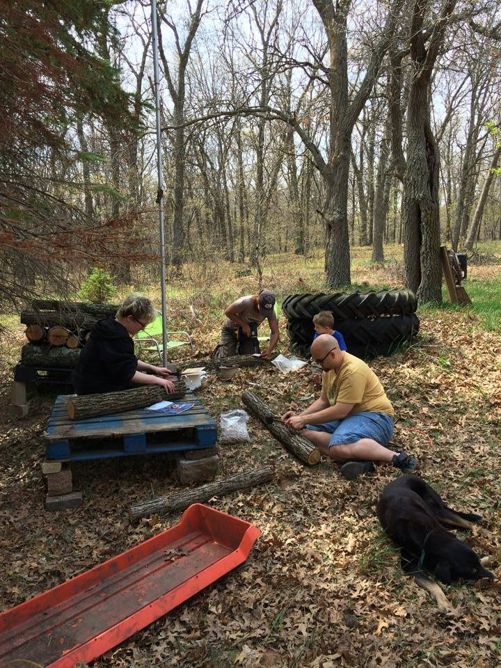 inoculating mushroom logs with friends