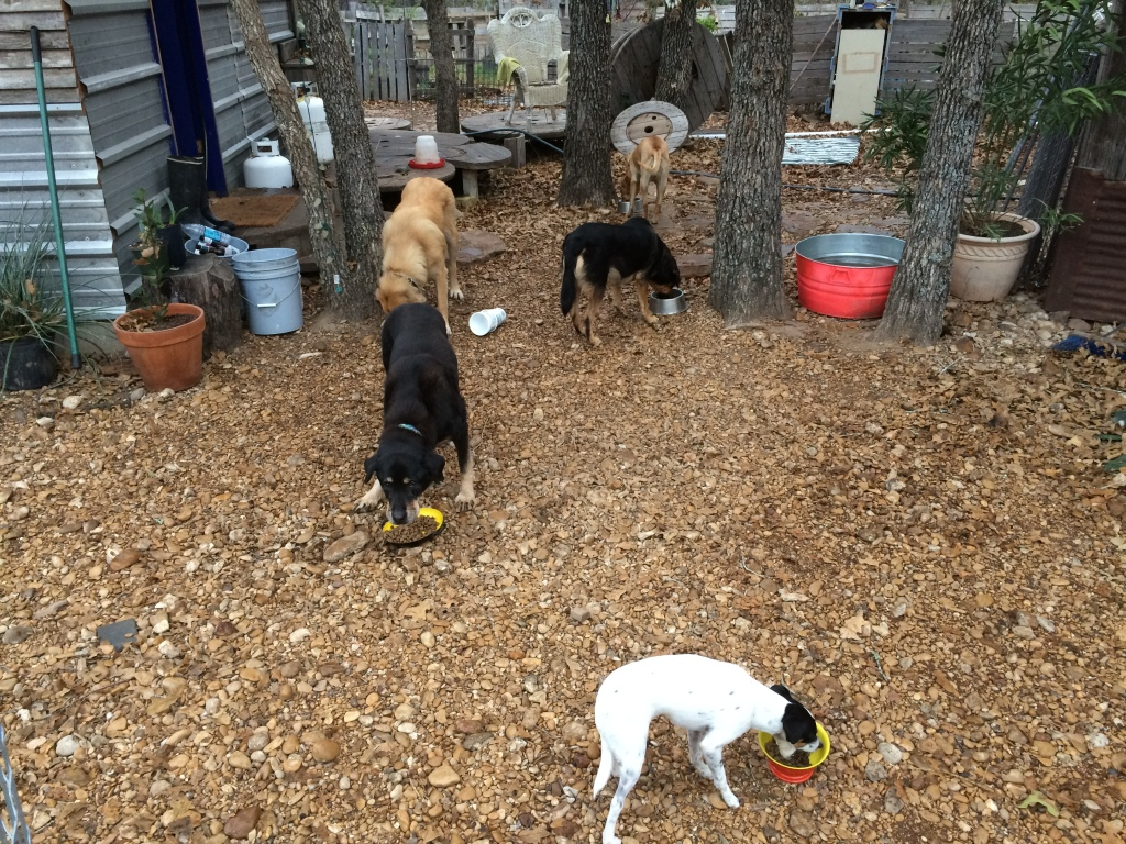 clockwise from foreground: Widget, Cleo, M, Lola, and Lily)