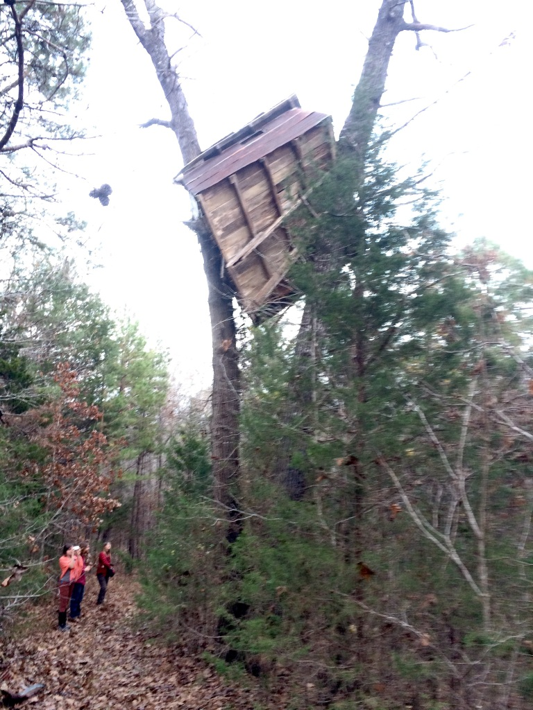 and old treehouse failure decorates the woods of Richardson Farm