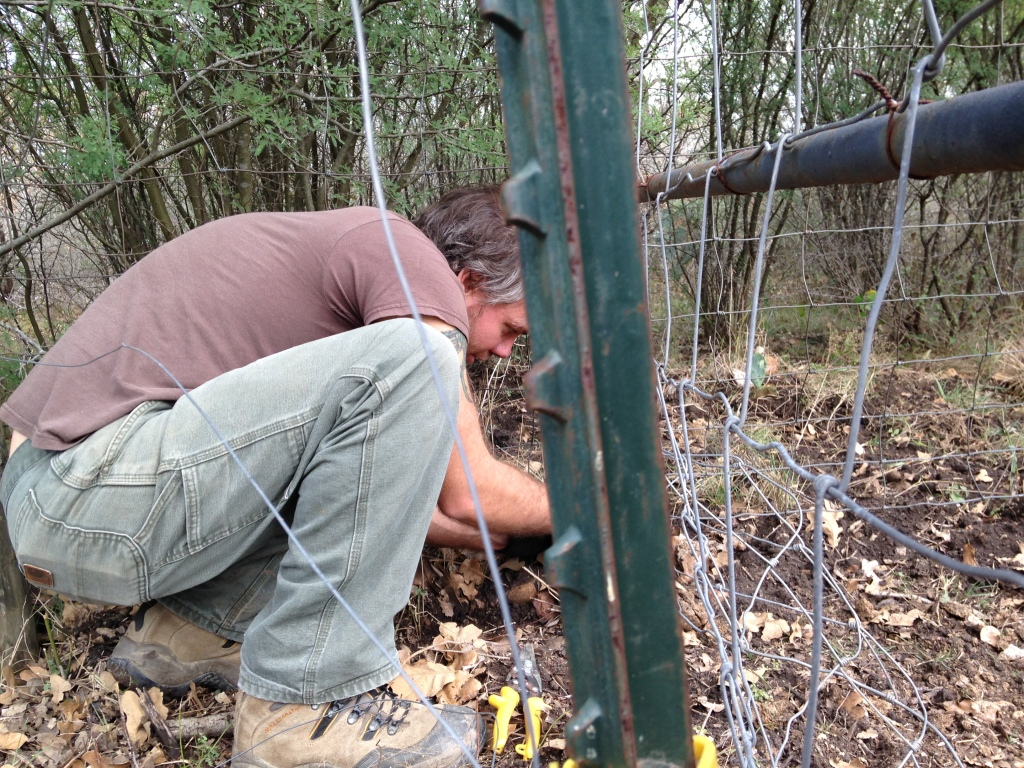 scavenging fencing