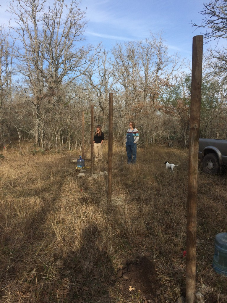beginning the fencing of the new field (to keep out deer, dogs, wild pigs, etc - and temporarily contain Bertha)