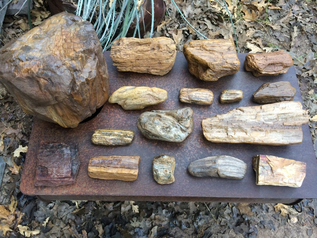 the petrified wood collection so far, gathered on our walk abouts on the property