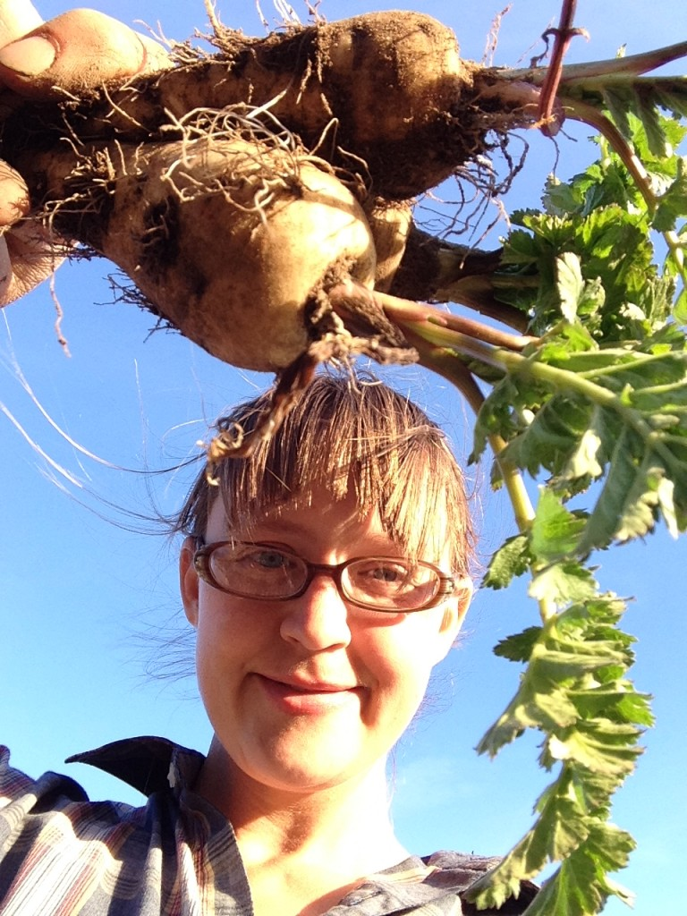 harvesting dinner from the field - parsnips that survived the winter