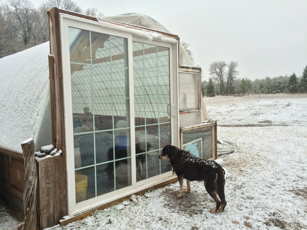 Cleo is over the cold & ready to enjoy the Greenhouse Effect
