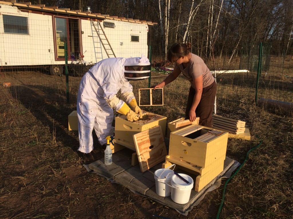 We got Jim some bee-keeping gear for Christmas, and he took a class ... next thing you know, he's in a bee suit, you're helping dump a hive of bees into a box, and everyone is getting stung. Except for the man in the suit of course ...