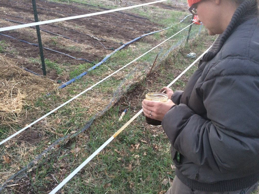 baiting the electric fence with sweet syrup, so deer learn to fear it