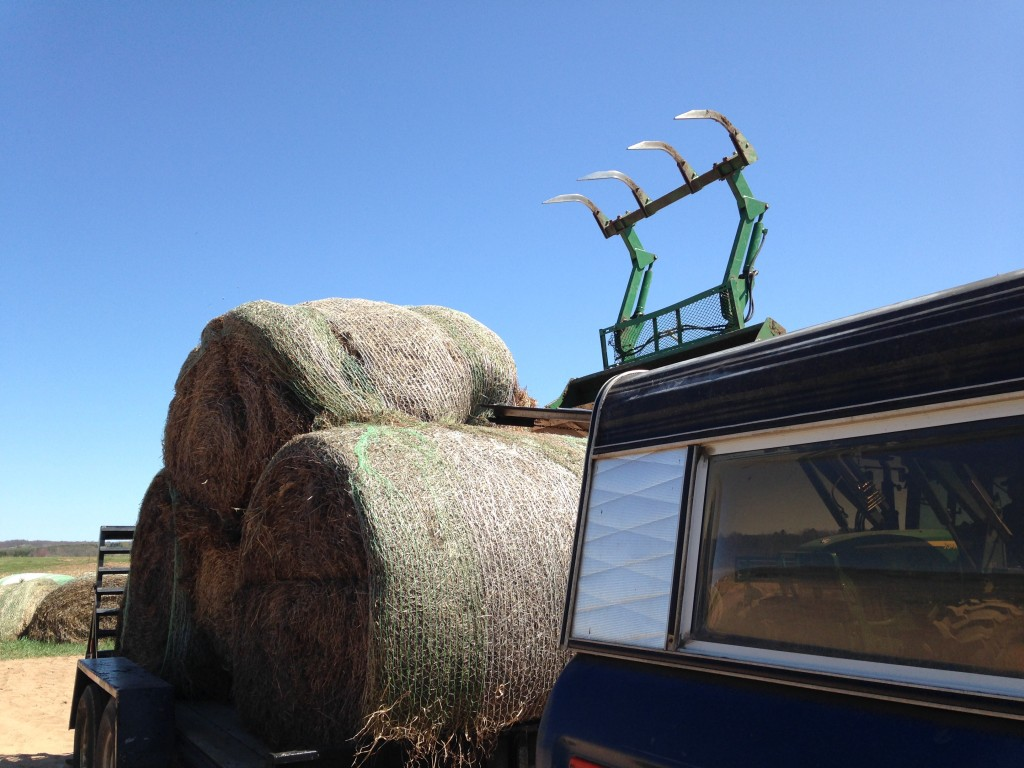 at a local farm getting loaded up with rounds of old hay for mulch
