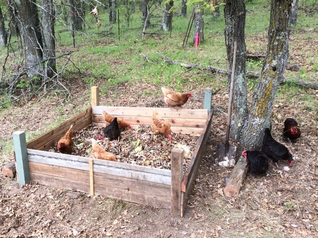 built a chicken composter box in their yard - they can eat lots of good scraps, while mixing it up with the dead leaves
