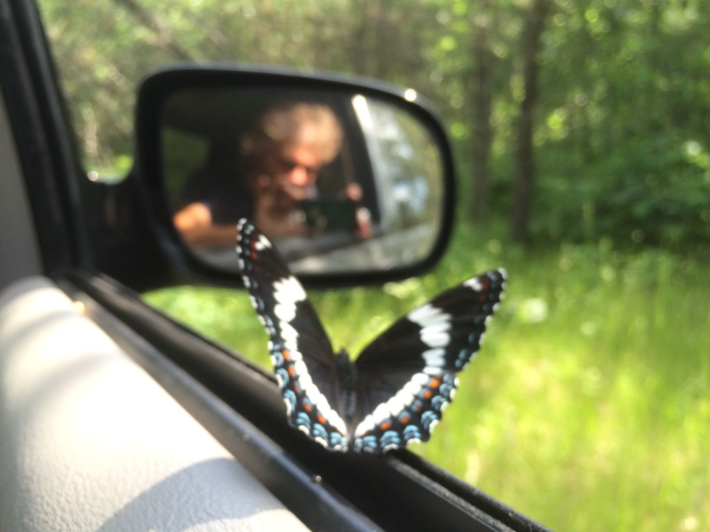 this butterfly hung out with us for a long drive through the woods