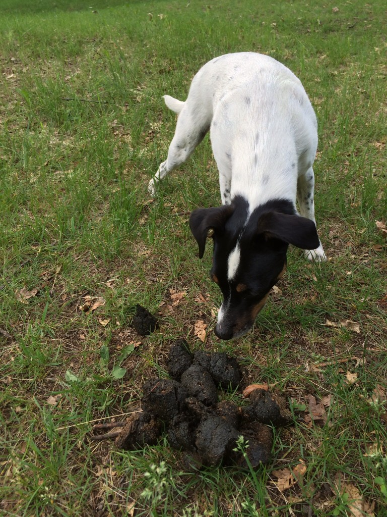 Does a bear poop in the woods? No, it poops in our front path