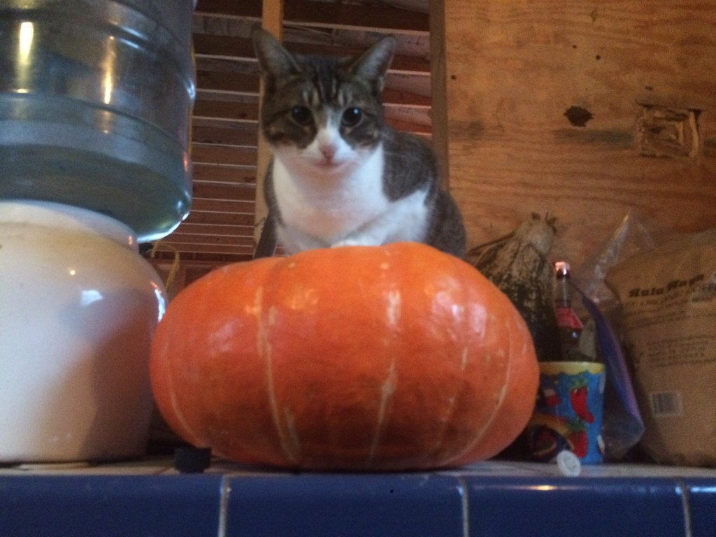 Scout modeling an imported Que Sehra pumpkin