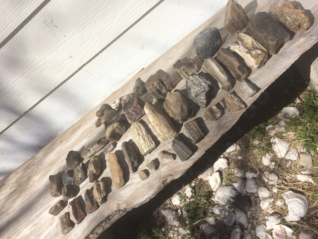 found a lot of fossilized wood in our down time