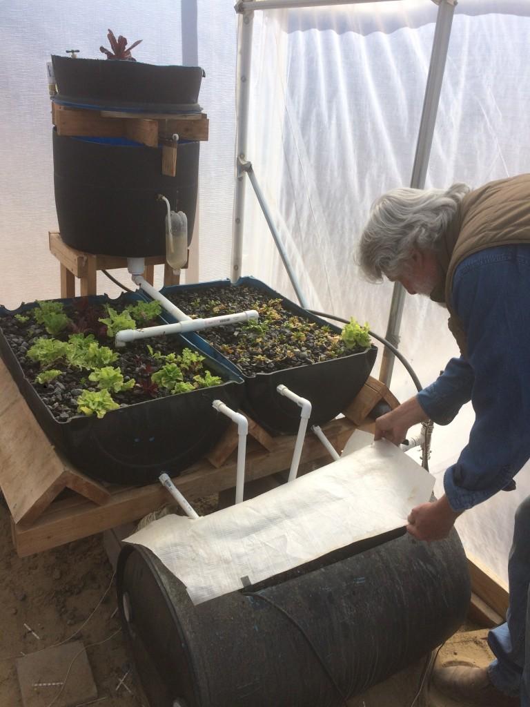Farmer Gene tends the Barrelponics system