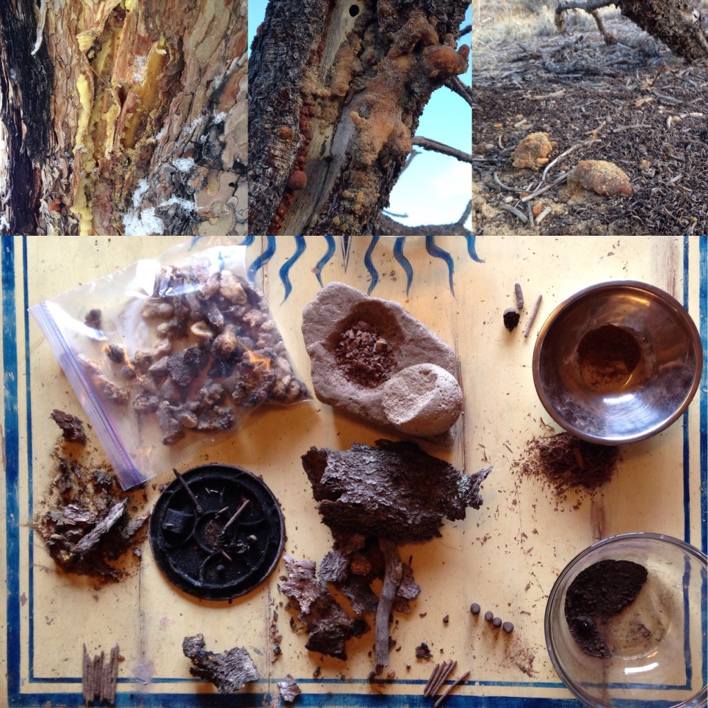 the local Pinion Pines had been ravaged by boring beetles - which resulted in an abundance of fragrant resin globs all over the place, just waiting to be collected and turned into incense ...