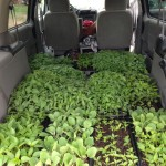 plus trays on the front passenger seat and foot well.