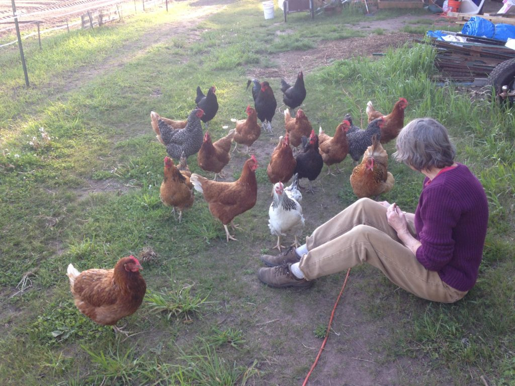 Neighbor Marcia, the Chicken Whisperer