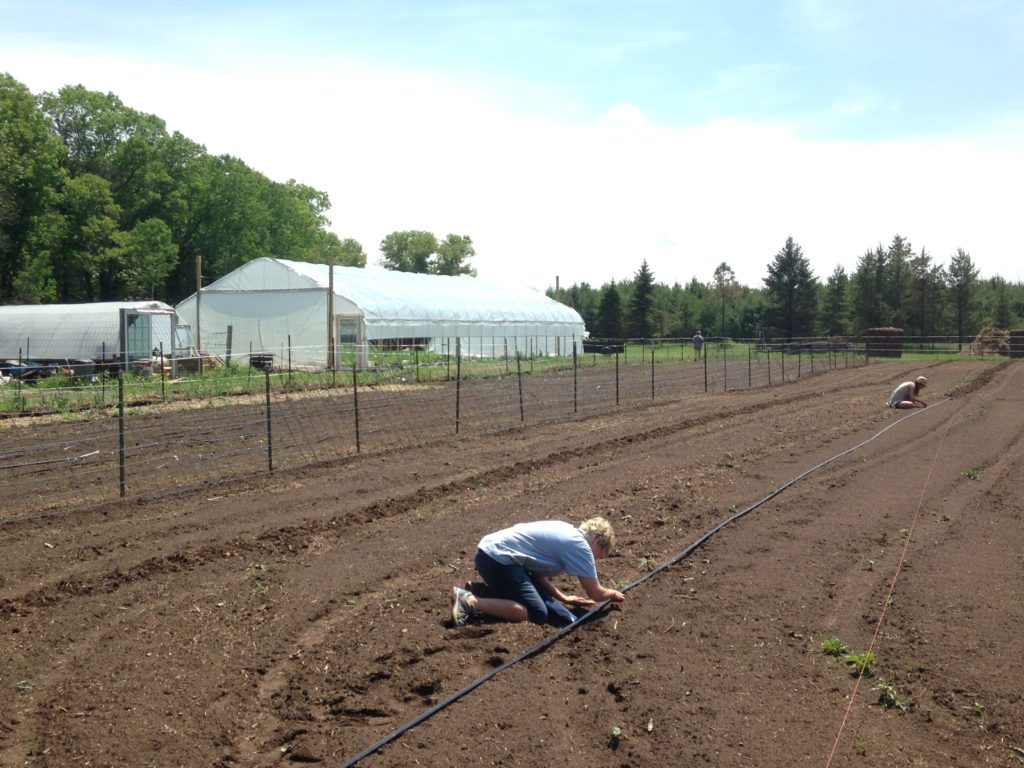 Deb & Nora transplanting cauliflower & broccoli