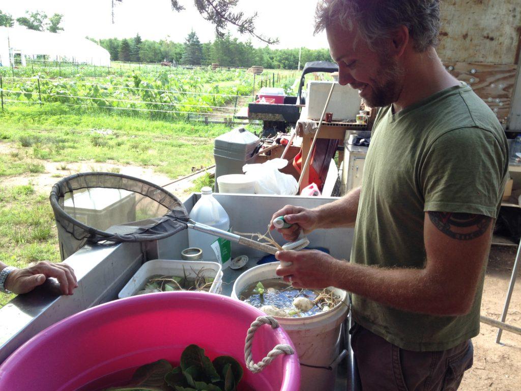 scrubbing turnips