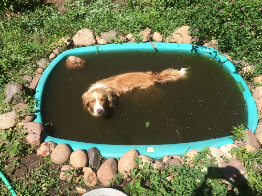 Ace cools off with the tadpoles