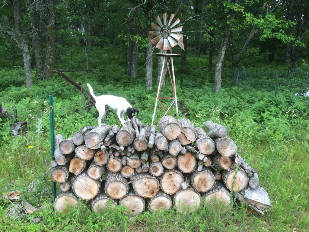 critter in the woodpile is not having any of Widget's efforts to get it out