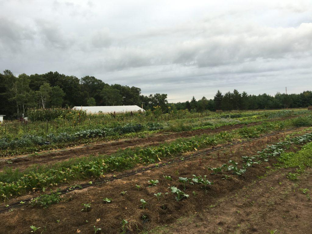 Enchanting Craigslist Detroit Farm And Garden Image - Brown Nature ...