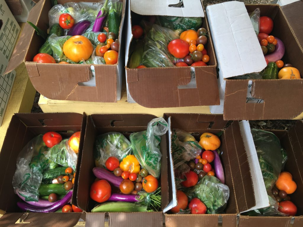 August 2016 CSA boxes being packed