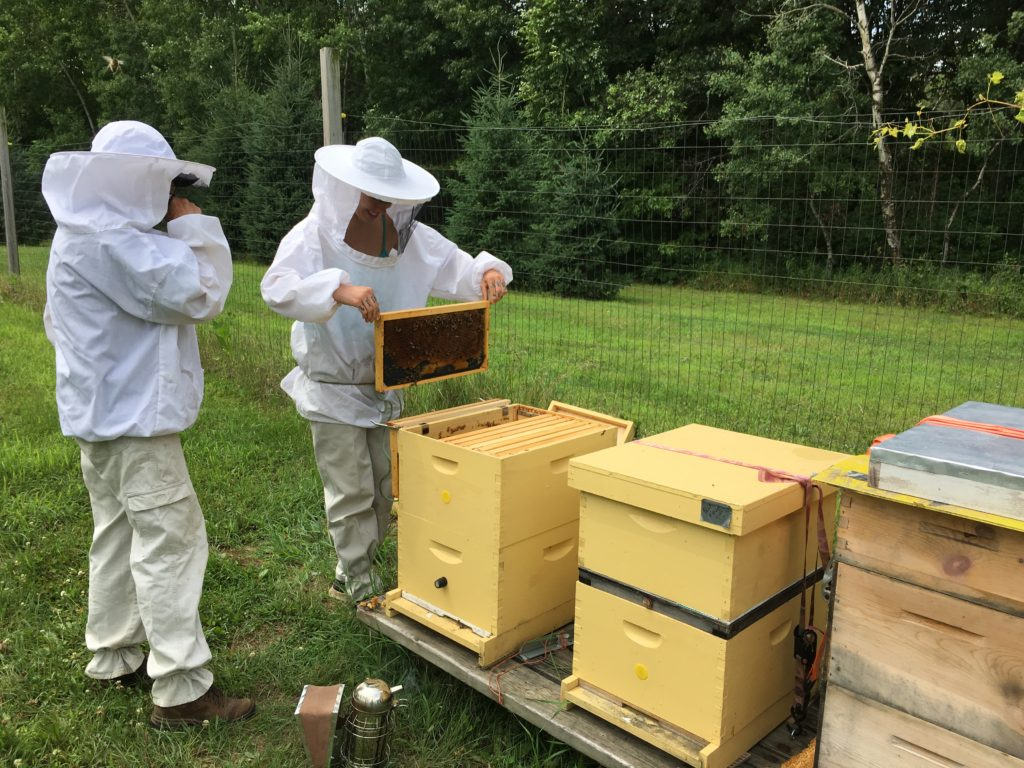 Neighbor Marcia shows WWOOFer Grace how to perform a bee hive inspection