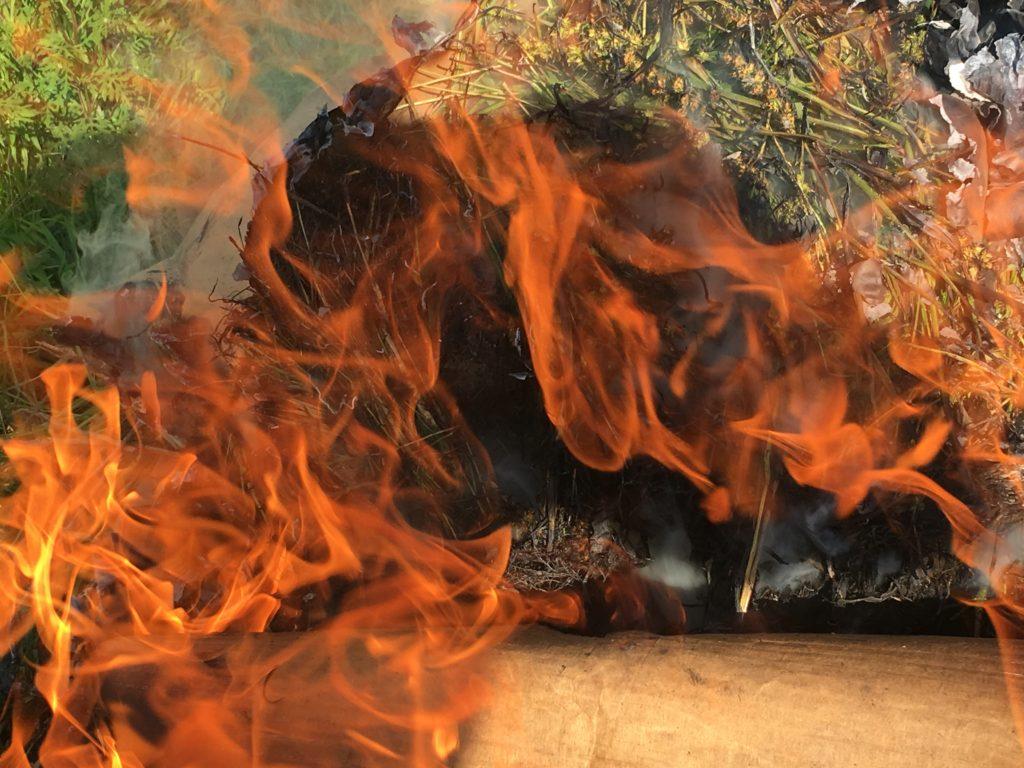 Fire: the only treatment for sandbur grass