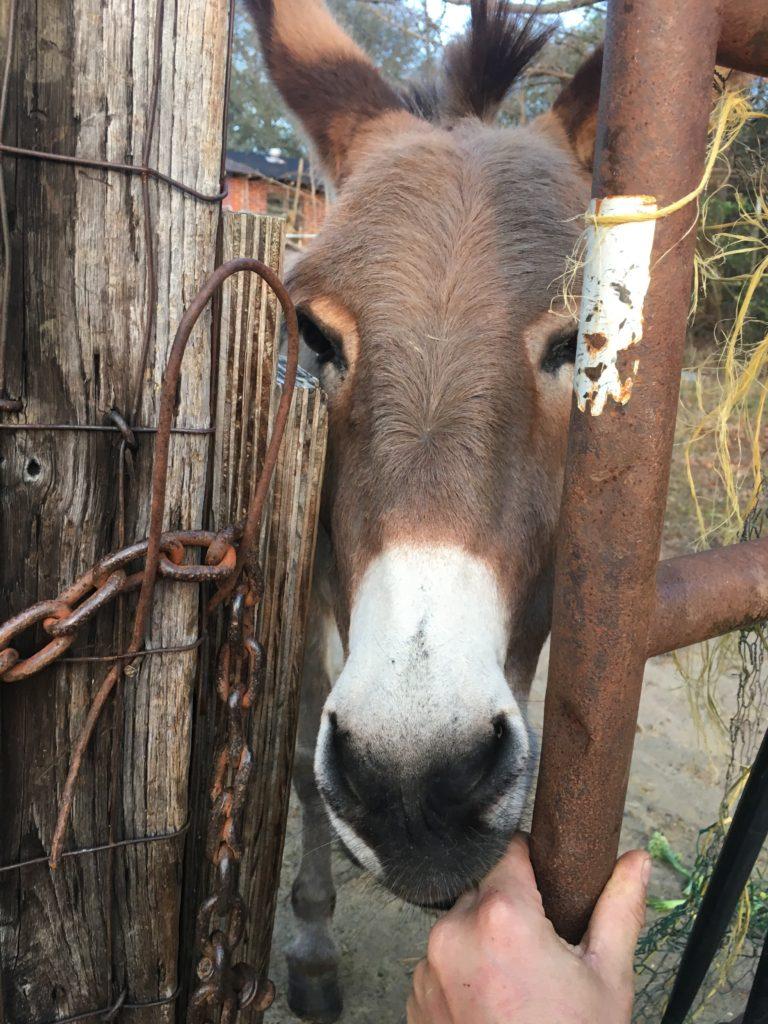 donkeys are good people