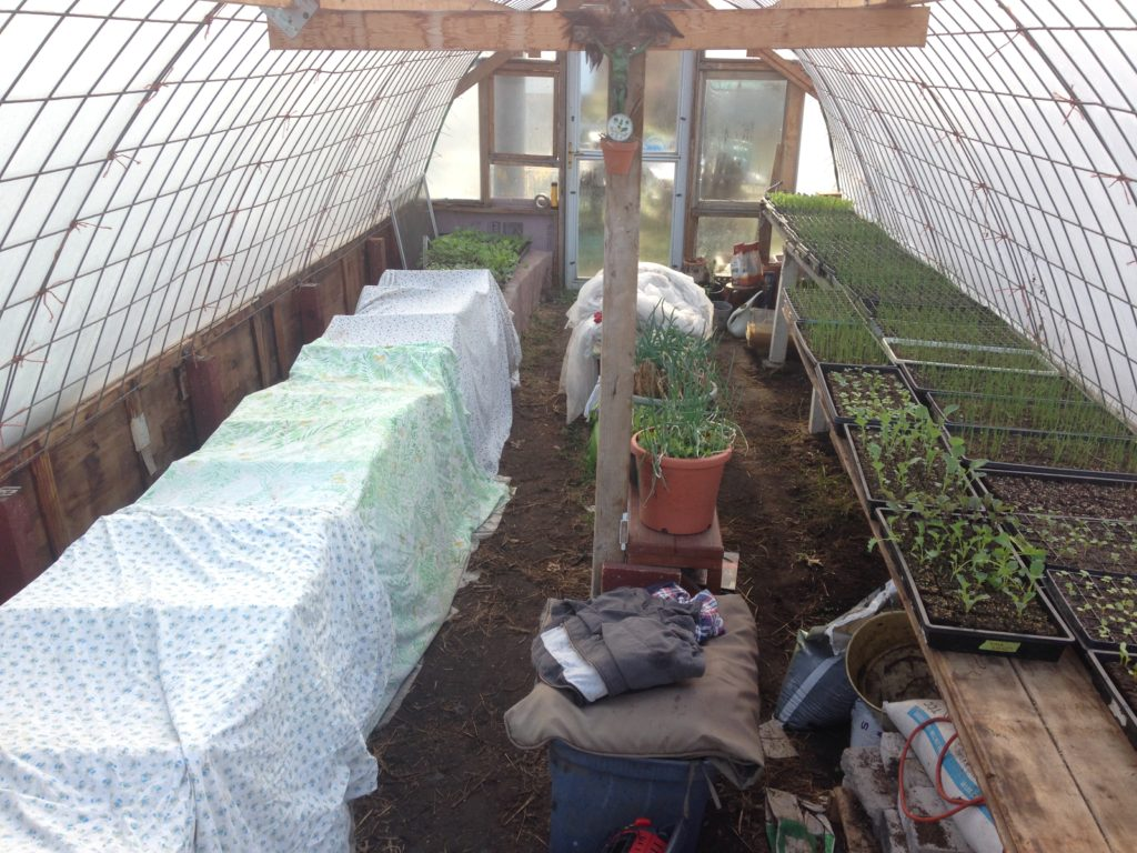 warm season crops snug under cover on the heated bench, while more hardy cool weather crops hang out in the nude