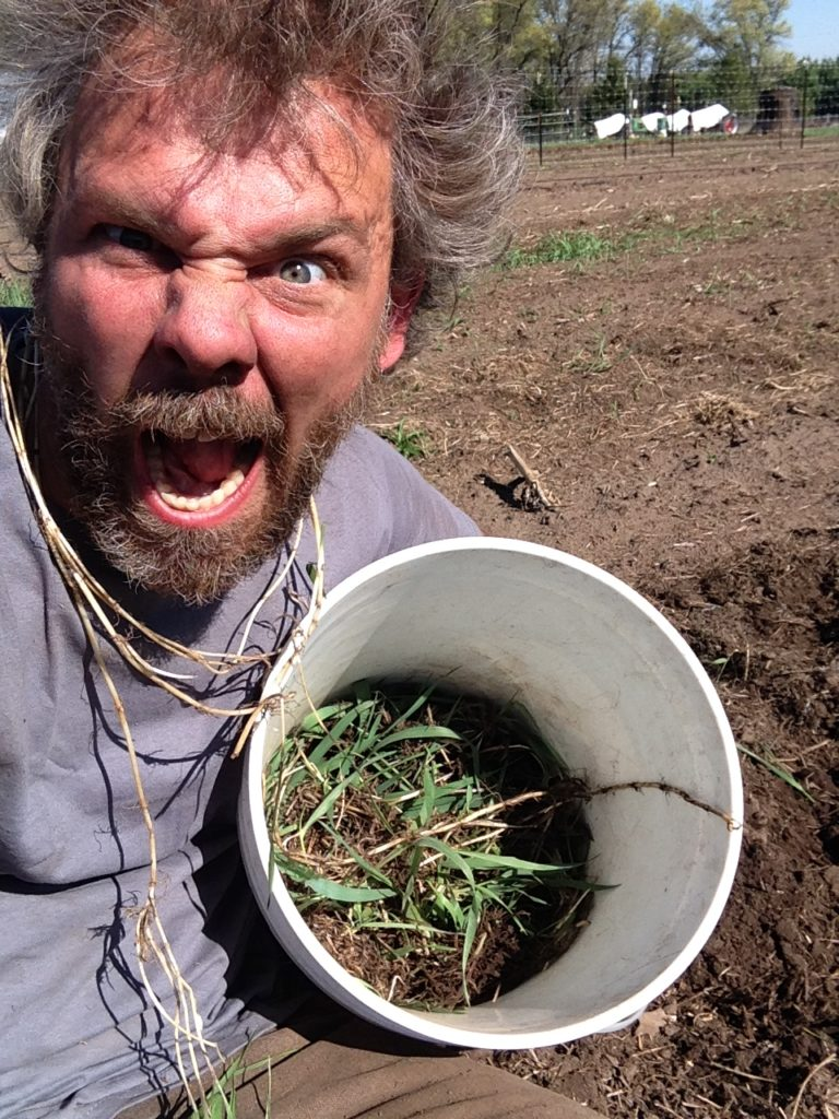 we took several bucketfuls of quack grass rhizomes out that day ... the weed bloodlust was strong.