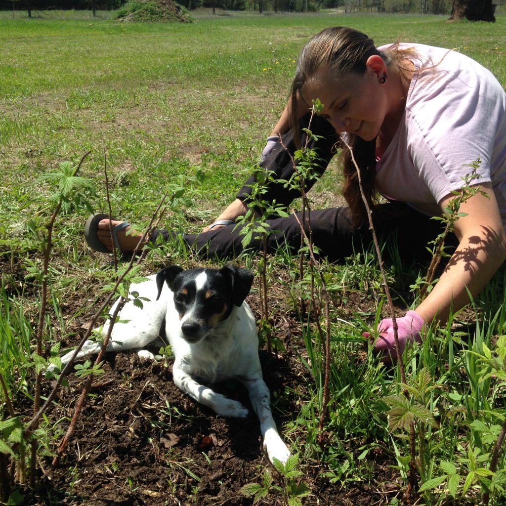 Widget helps weed the raspberry patch