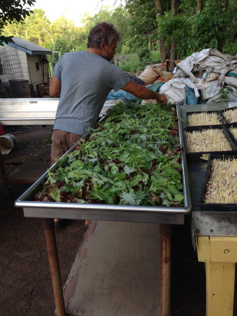 layering the salad mix