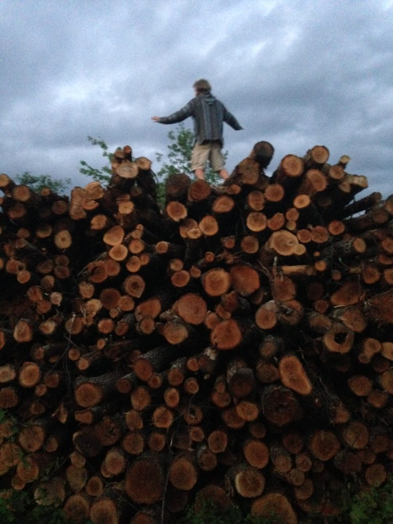 WWOOFer Marty surfs the logging operation's woodpile