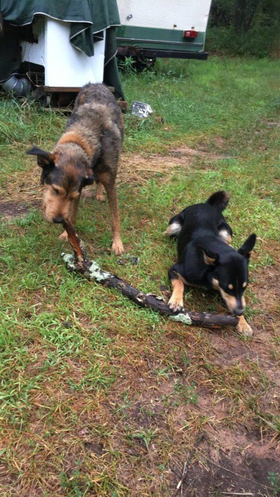 WWOOFer woofers Baxter & Kingsbury share a stick