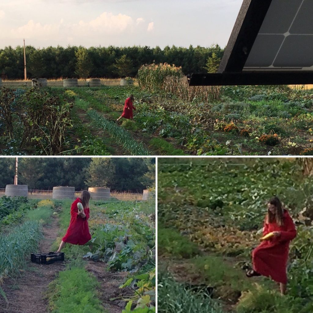Kristin stole my robe to go zucchini hunting early one morning