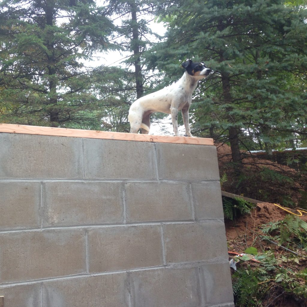 Widget atop the root cellar - which is on track to be complete before winter comes in earnest!