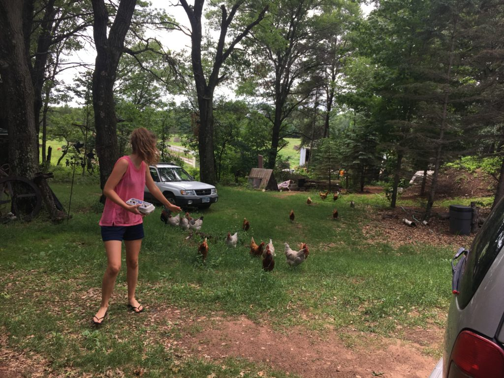 WWOOFer Amelia pursued by hens after gathering eggs