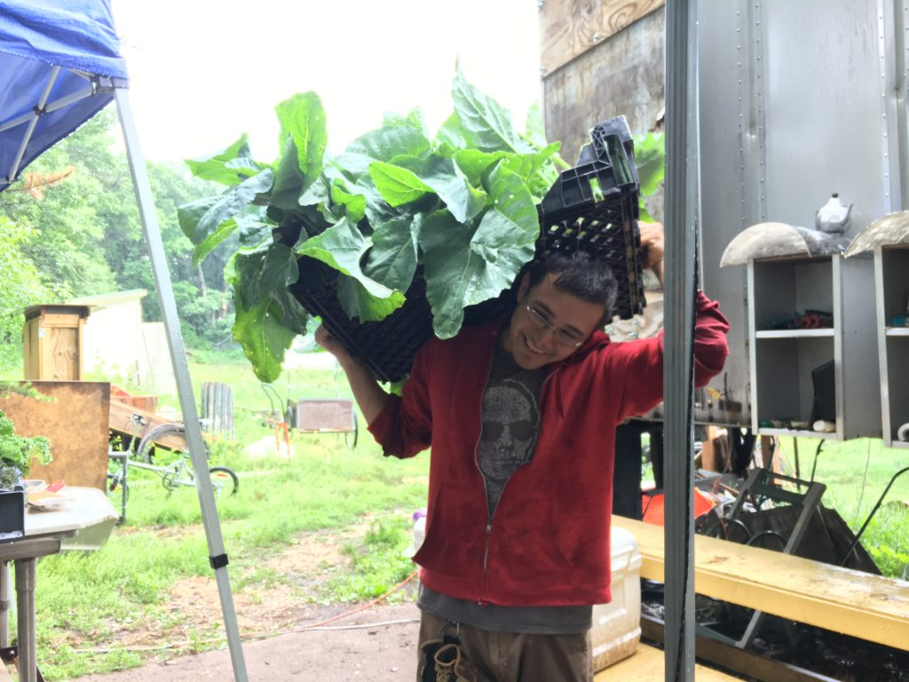 Steffan hauling in a load of kohlrabi from the field this morning