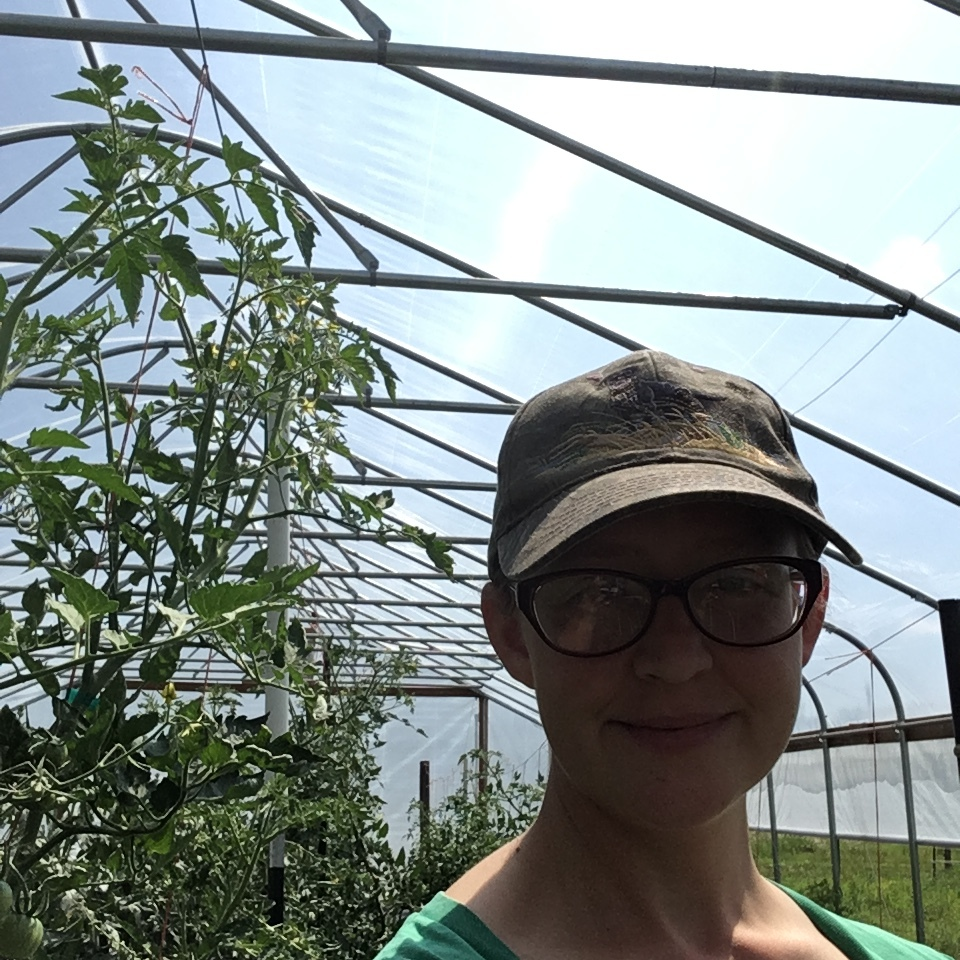 tomato plants taller than us and still growing