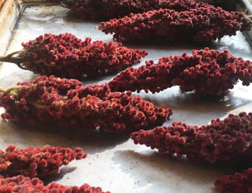 Sumac flowers on their way to beverage form