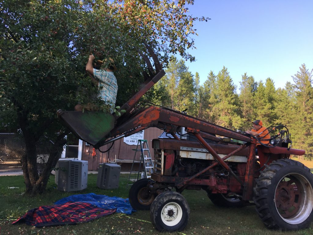 Neighbor Don lifts Gabe & Jeff skyward, to pick crabapples from his tree