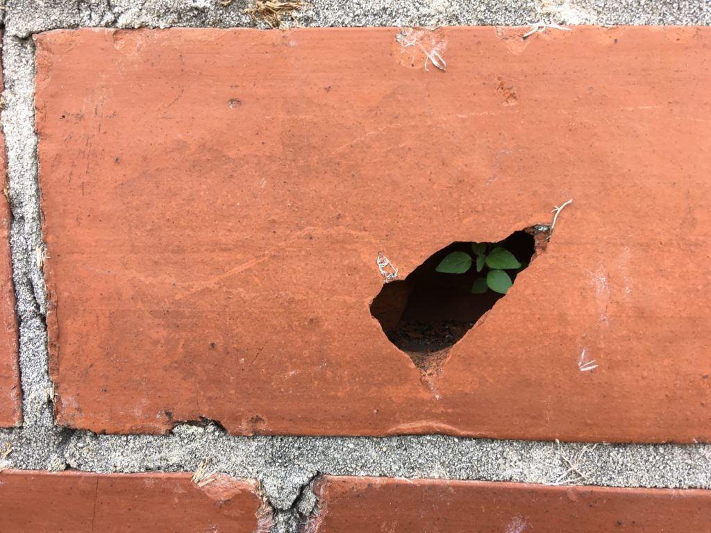 life's hope springing eternal inside a brick