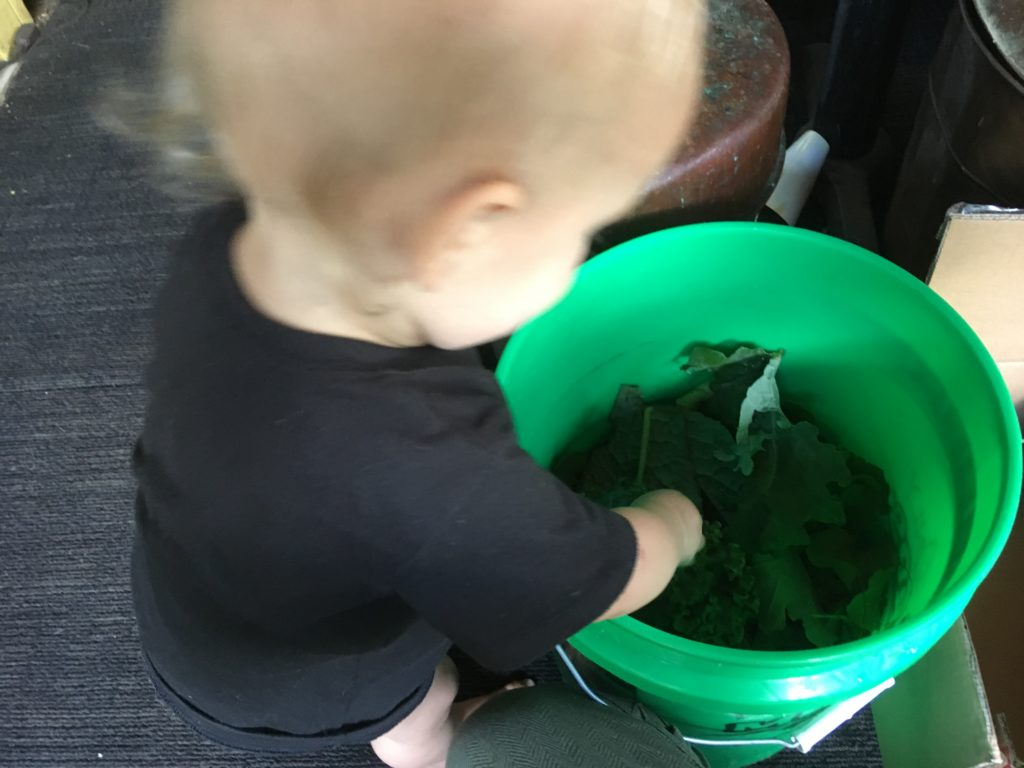 Otis helps rinse some kale